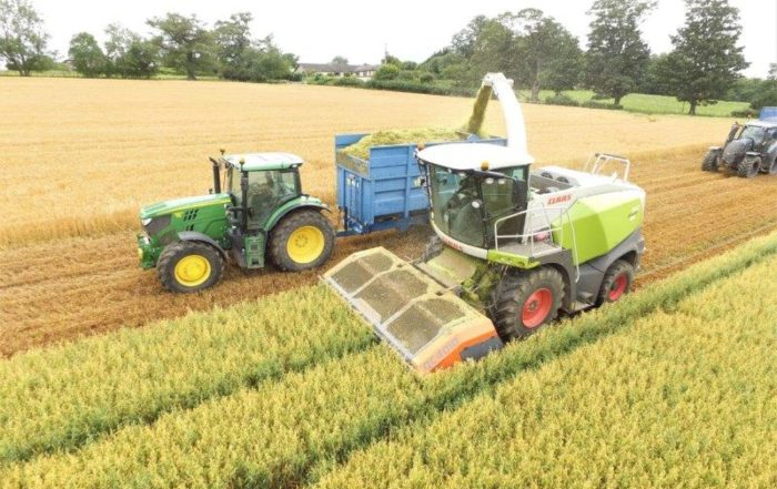 Filling a silage trailer with wholecrop oats